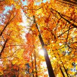 The Spookiest, The Cosiest, The Prettiest: Autumn's Five Unmissable City Breaks