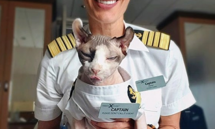 Meet Celebrity Cruises Most Feline Member Of The Team