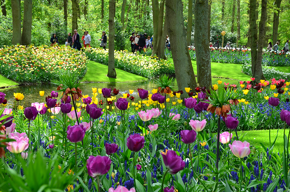 Lisse, Netherlands-May 10,2015: People walking and getting relaxed inside the Keukenhof garden which is the world's largest flower garden.