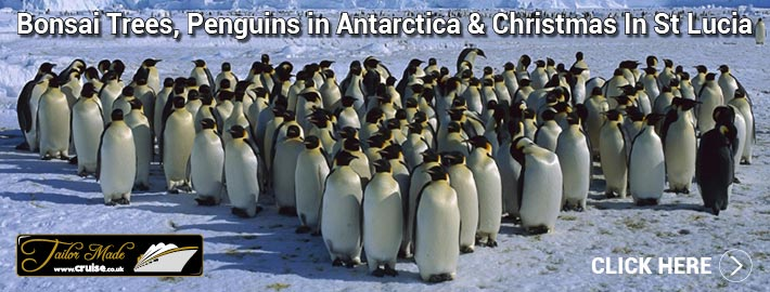Bonsai Trees, Penguins in Antarctica & Christmas In St Lucia