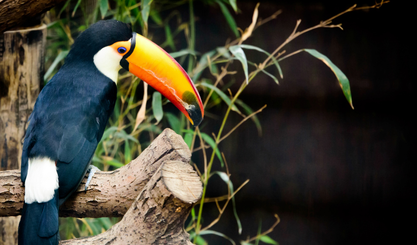 Costa Rica & Panama Canal with Volcanoes, Cloud Forests & Turtle Hatching