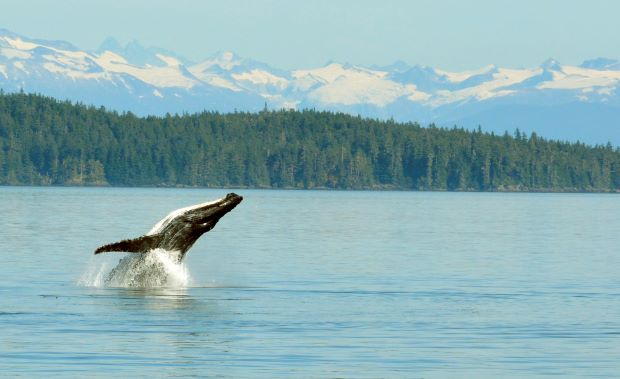 Alaska Discovery with Canada & Seattle